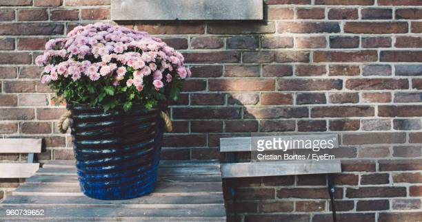 close-up flowers in container on wooden table - bortes stock pictures, royalty-free photos & images