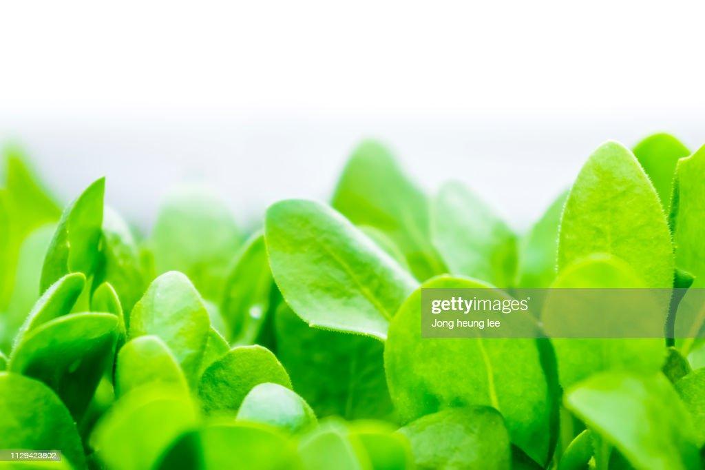 Close-up fresh green leaf : Stock Photo