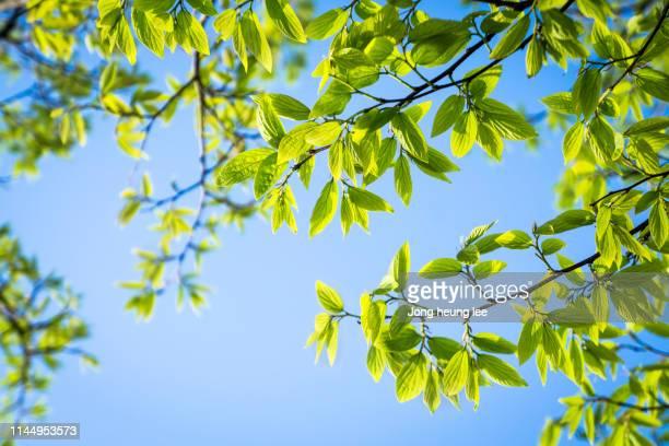 Close-up fresh green leaf