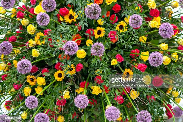 a close-up, full-frame image of a vibrant flower display using purple alliums, yellow sunflowers and red roses - allium flower stock pictures, royalty-free photos & images