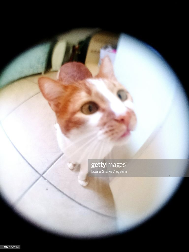 Close-Up High Angle View Of A Cat : Stock Photo