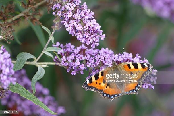 close-up high angle view of butterfly on flowers - howard,_wisconsin stock pictures, royalty-free photos & images