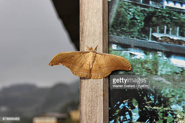 Close-Up High Angle View Of Butterfly On Pole