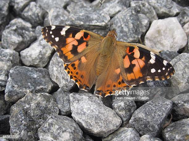 Close-Up High Angle View Of Butterfly On Stones