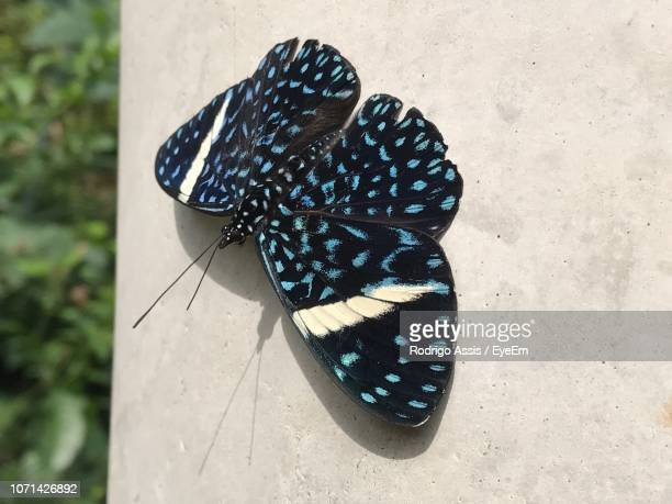 close-up high angle view of butterfly - assis ストックフォトと画像