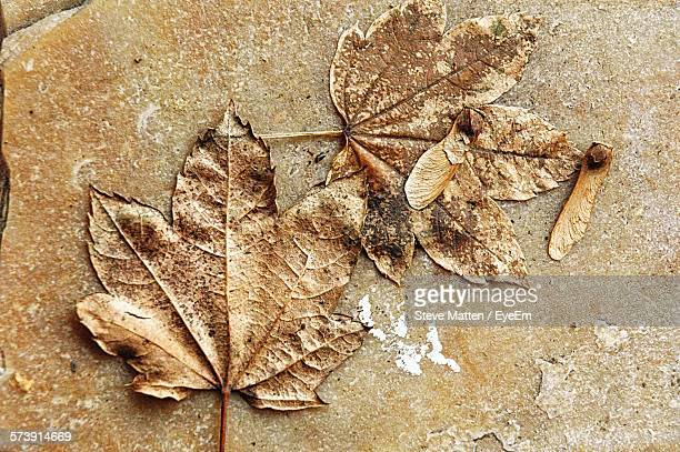 close-up high angle view of dry leaves on ground - steve matten stock pictures, royalty-free photos & images