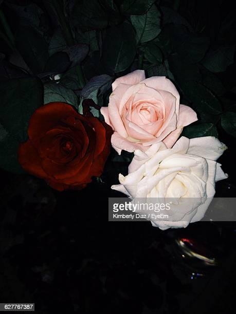 Close-Up High Angle View Of Roses Over Black Background