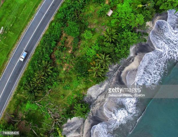 close-up high angle view of tree - papua new guinea stock pictures, royalty-free photos & images