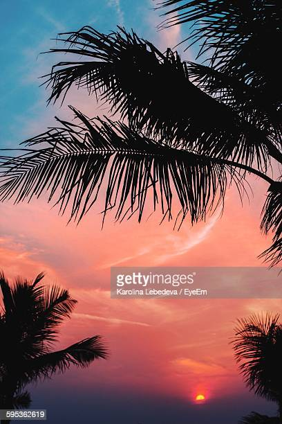 Close-Up High Section Of Silhouette Palm Trees Against Clouds