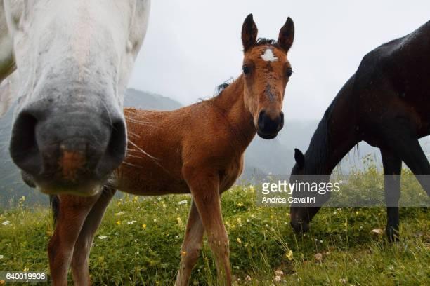 closeup horse shot - accouplement cheval photos et images de collection