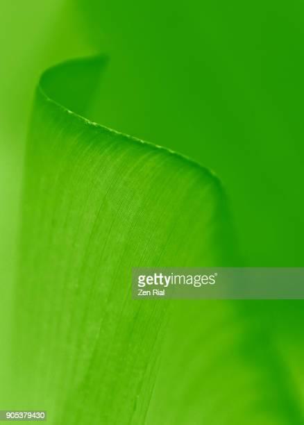 Close-up image of a tropical leaf