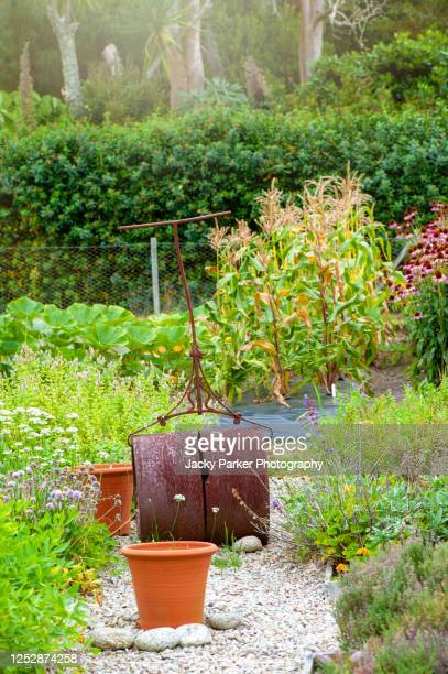 close-up image of a vintage cast iron garden roller in a domestic garden setting - terracotta stock pictures, royalty-free photos & images