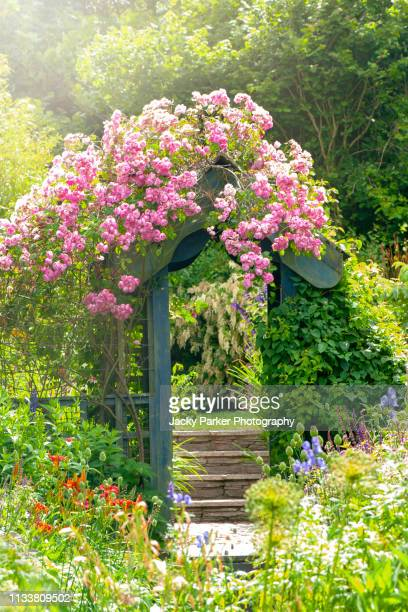 close-up image of beautiful summer flowering pink climbing roses on a wooden garden arch in an english cottage garden - boog architectonisch element stockfoto's en -beelden