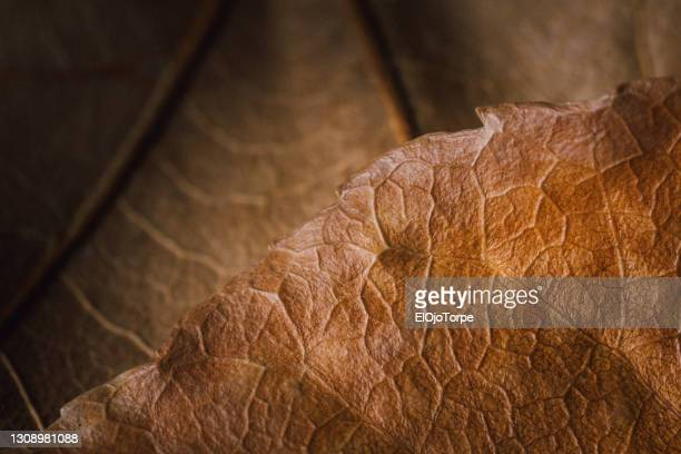 close-up image of leaves in autumn, no people - uruguay stock pictures, royalty-free photos & images