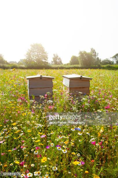 close-up image of wooden beehives in a beautiful summer wildflower meadow - honey bee stock pictures, royalty-free photos & images