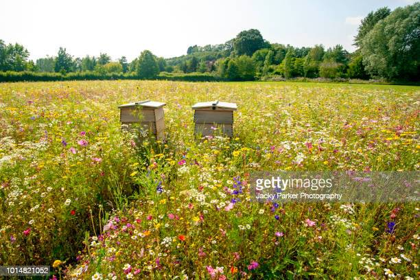 close-up image of wooden beehives in a beautiful summer wildflower meadow - flower head stock pictures, royalty-free photos & images
