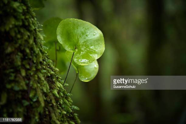 close-up in the rain forest - selective focus stock pictures, royalty-free photos & images
