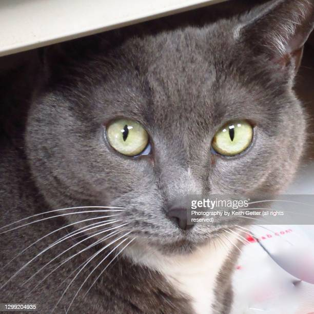 close-up kitten face - animal eye stock pictures, royalty-free photos & images