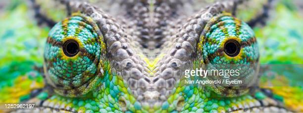 close-up lizard eyes - kumanovo stock pictures, royalty-free photos & images