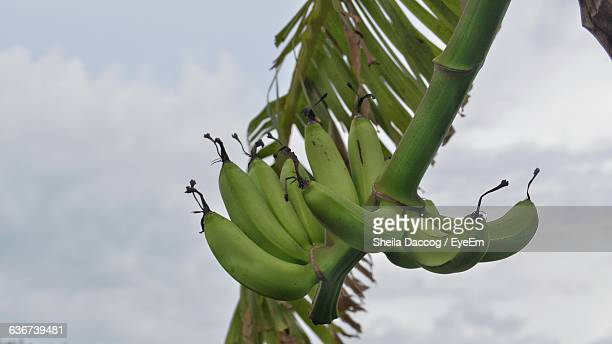 Close-Up Low Angle View Of Bananas Against Sky