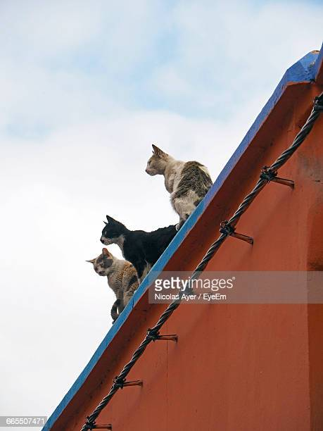 Close-Up Low Angle View Of Cats Against Clouds