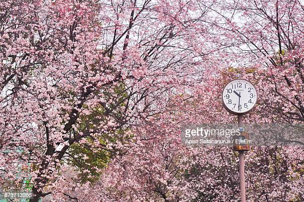 close-up low angle view of flower trees - clock tower stock pictures, royalty-free photos & images