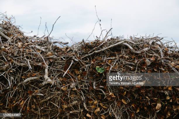 close-up low angle view of sky - land stock pictures, royalty-free photos & images