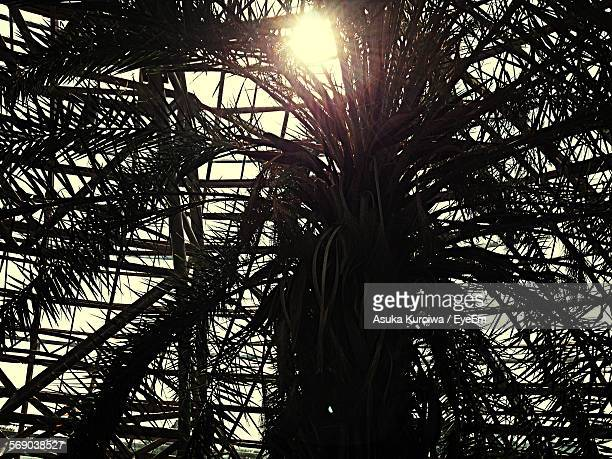 close-up low angle view of trees - asuka stock pictures, royalty-free photos & images