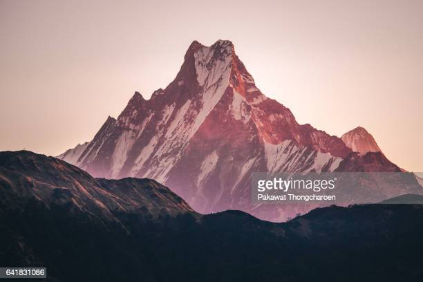 close-up machapuchare (fish tail) at sunrise from poon hill, annapurna conservation area, nepal - machapuchare stock photos and pictures
