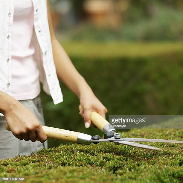 Close-up mid section of woman cutting hedge with hedge clippers