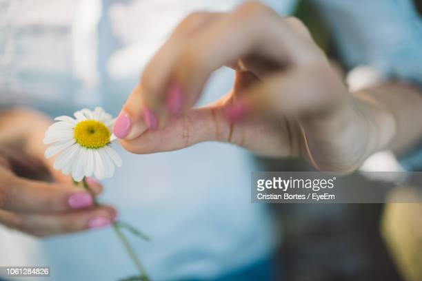 Close-Up Midsection Of Woman Holding Daisy
