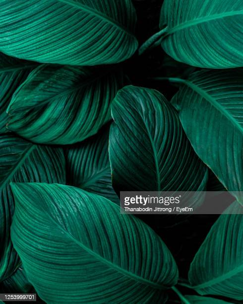 closeup nature view of green leaf background, dark wallpaper concept. - tropical climate stock pictures, royalty-free photos & images