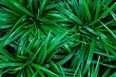 closeup nature view green leaf texture