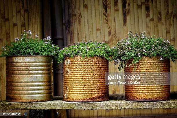 close-up of 3 plants metal tin container - pot plant stock pictures, royalty-free photos & images