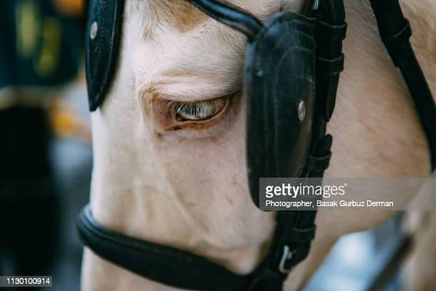 Close-up of a beautiful horse