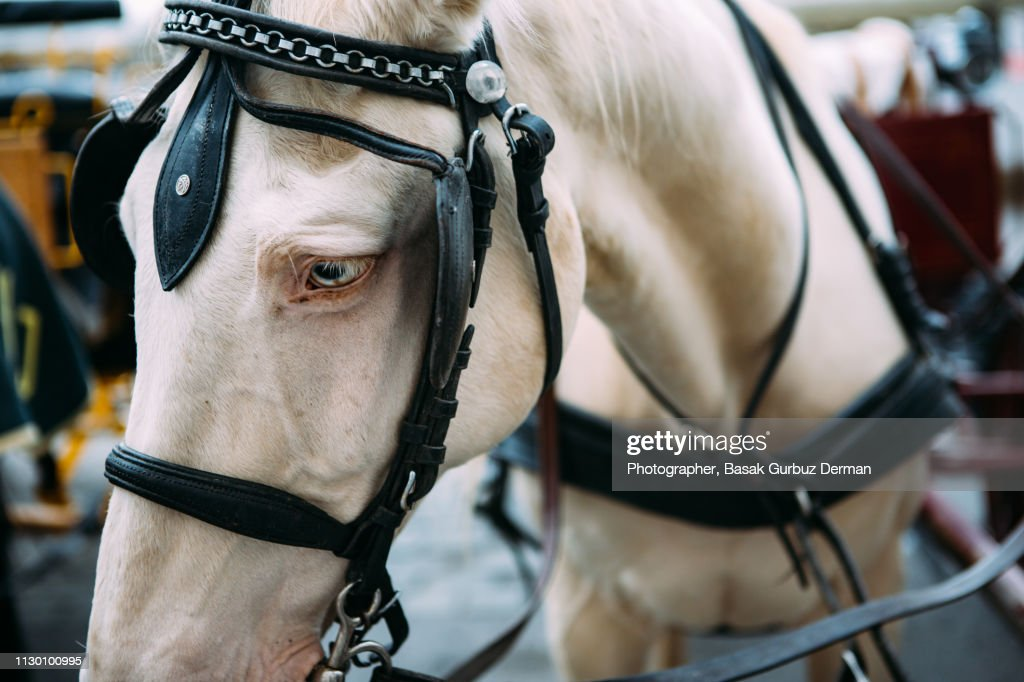 Close-up of a beautiful horse : Stock Photo