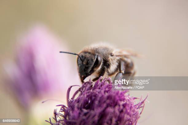 Close-up of a bee on a purple flower