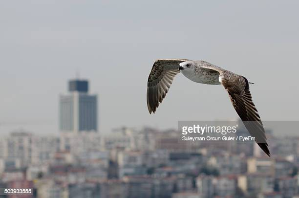 Close-up of a bird flying over blurred cityscape