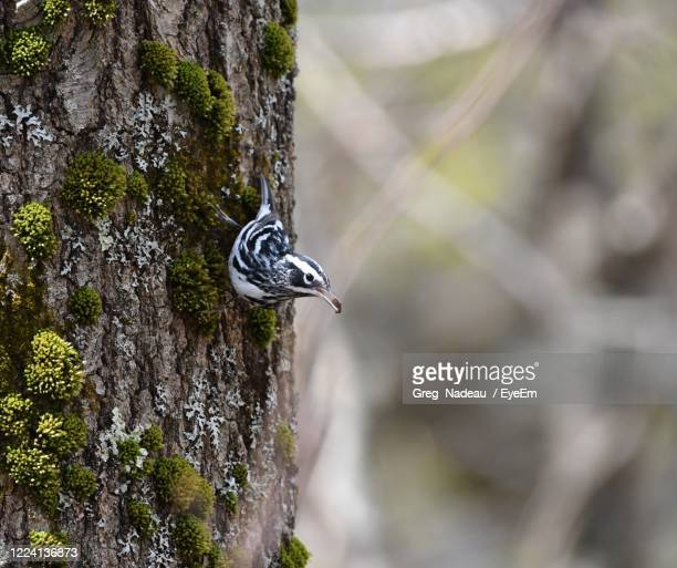 close-up of a bird on tree trunk - greg nadeau stock pictures, royalty-free photos & images