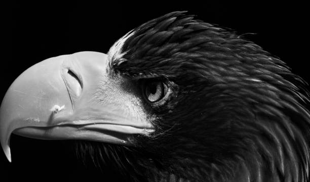 Close-Up Of A Bird Over Black Background