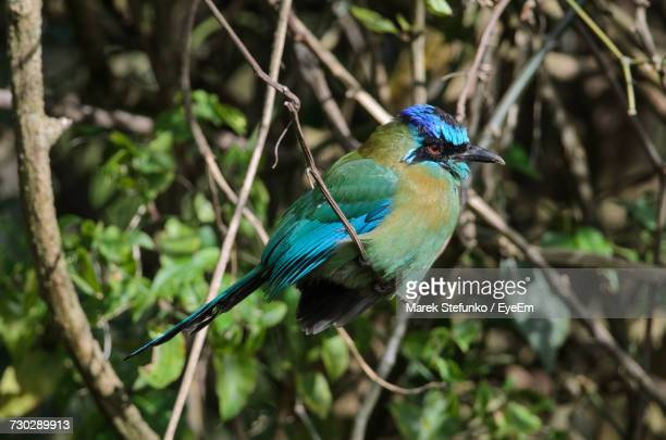close-up of a bird perching on branch - marek stefunko stock photos and pictures