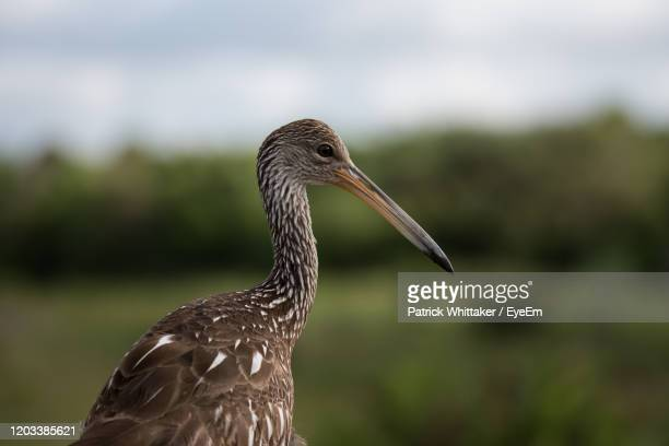 close-up of a bird - delray beach stock pictures, royalty-free photos & images