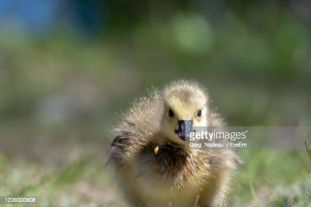 close-up of a bird - greg nadeau stock pictures, royalty-free photos & images