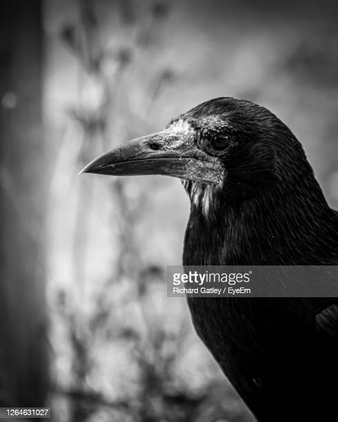 close-up of a bird - chichester stock pictures, royalty-free photos & images