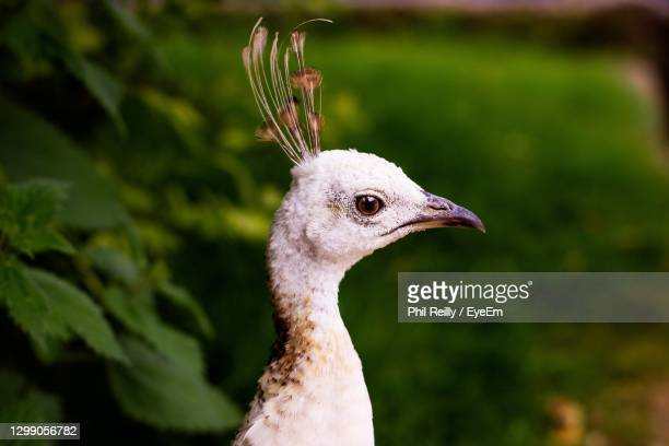 close-up of a bird - malton stock pictures, royalty-free photos & images