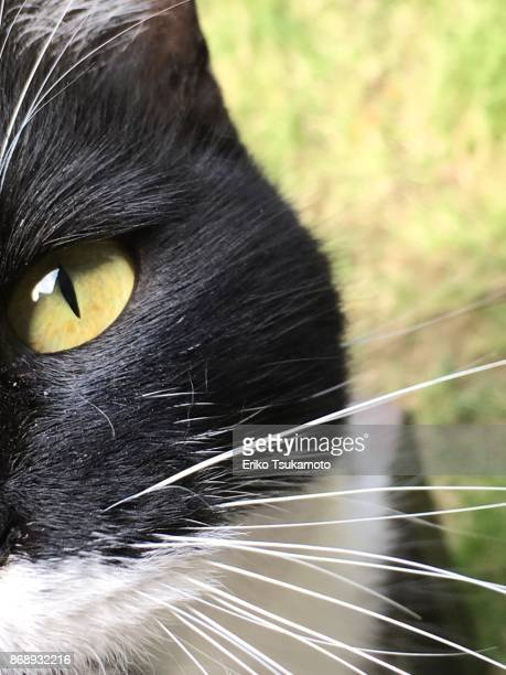 Close-up of a black and white cat