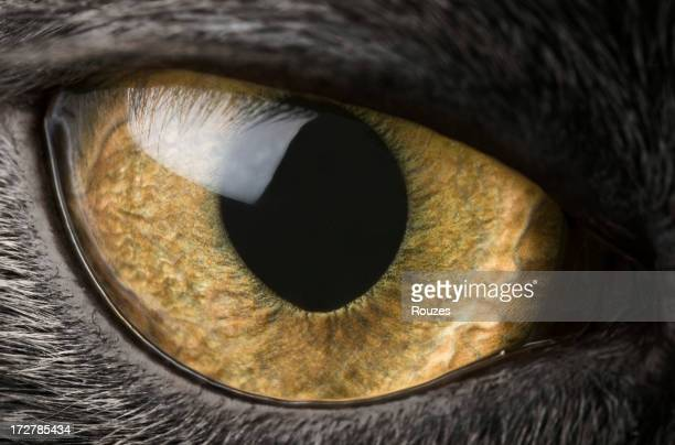 A close-up of a black cat's eye