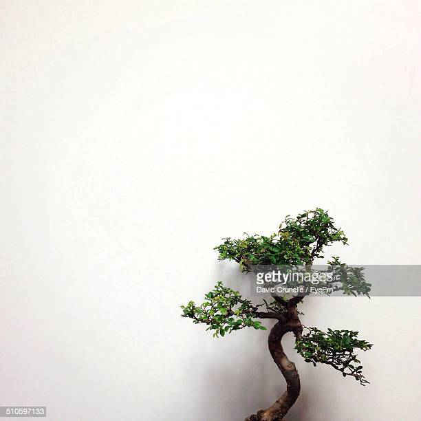 close-up of a bonsai tree over white background - bonsai tree stock pictures, royalty-free photos & images