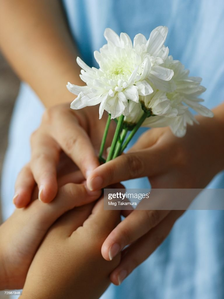 closeup of a boy giving a flower to a woman stock photo getty images