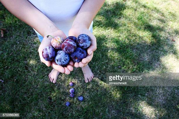 Close-up of a boy holding plums